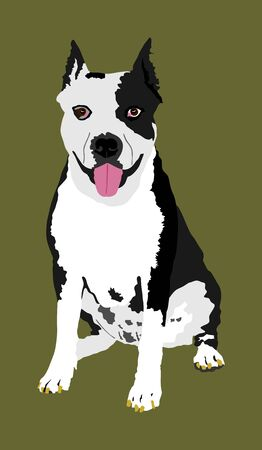 Dog portrait of American Staffordshire pit bull terrier vector illustration isolated. Beware of purebred dog. Dog show champion. Best friend. Alert, guard attention.
