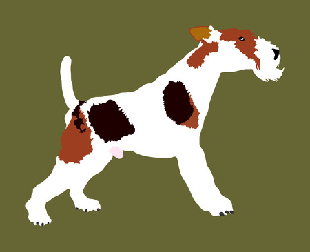 Portrait of Fox Terrier vector illustration isolated. Beware of dog.