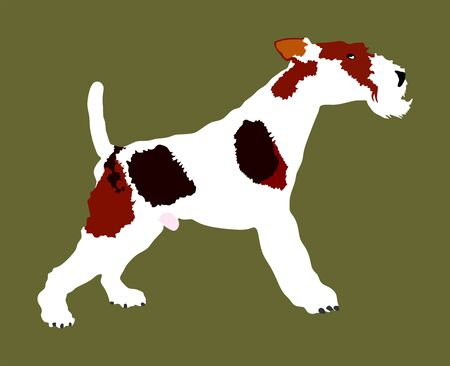 Portrait of Fox Terrier vector illustration isolated. Beware of dog. Terrier dog breed. 向量圖像
