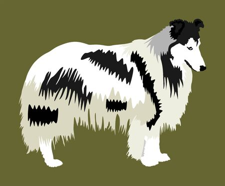 Portrait of Rough Collie vector illustration isolated. Scottish Shepherd dog. Beware of dog.