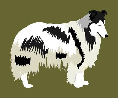 Portrait of Rough Collie vector illustration isolated. Scottish Shepherd dog. Beware of dog.