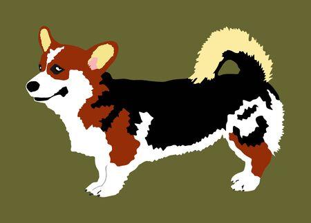Dog portrait of Welsh corgi Cardigan vector illustration isolated. Beware of dog. mans best friend. Lovely pet.