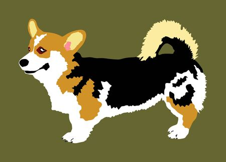 Dog portrait of Welsh corgi Cardigan vector illustration isolated. Beware of dog. man's best friend. Lovely pet.