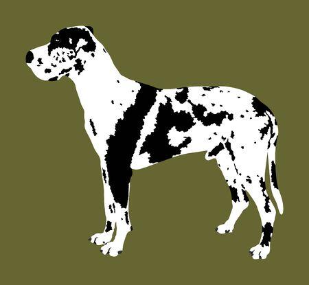 Portrait of Great Dane vector illustration isolated. Harlequin dog. German dog. Beware of dog. Protective sign. Guardian dog.