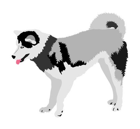 Siberian Husky dog vector illustration. Akita Inu breed. Working dog. Beware of purebred dog. Dog show champion. Best friend. Alert, guard attention. Stock Vector - 123765010