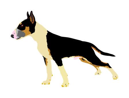 Portrait of Bull terrier vector illustration isolated.