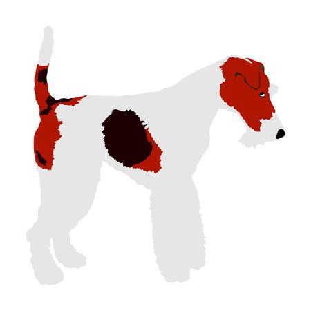 Portrait of Fox Terrier vector illustration isolated.