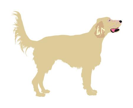Portrait of Golden Retriever vector illustration isolated.
