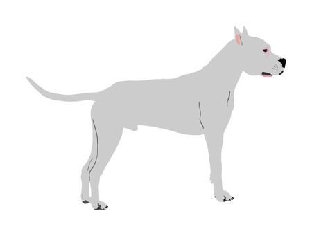 Dog portrait of American Staffordshire pit bull terrier vector illustration isolated. Dogo Argentino had. Guard sign. Beware of dog. Stafford shire.