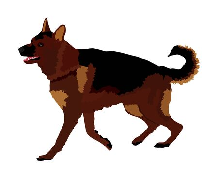Portrait of German Shepherd running dog vector illustration isolated. German Shepherd beware of dog. Finder detects military explosives and drugs. Rescue activity police dog. Blind person support.