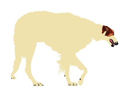 Portrait of White Russian Wolfhound dog vector illustration isolated. Borzoi Russian Hunting. Sighthound, Russkaya Psovaya Borzaya. Noble Psovoi. Illustration