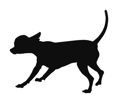 Chihuahua dog vector silhouette. Chivava dog portrait posing. Beware of dog. man's best friend. Lovely pet. Friendly animal. Purebred urban puppy. Illustration