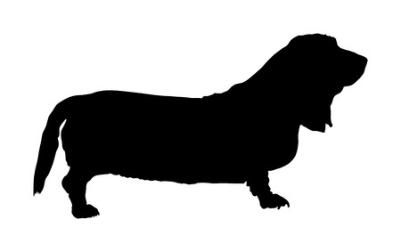 Portrait of Basset hound dog vector silhouette illustration isolated. Illustration