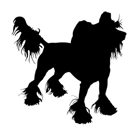 Chinese Crested Dog vector silhouette isolated on white background. Vector of funny dog.