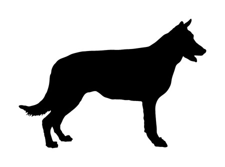 Portrait of Belgian Shepherd dog vector silhouette illustration isolated. Belgian Shepherd. Beware of purebred dog. Dog show champion. Best friend. Alert, guard attention.
