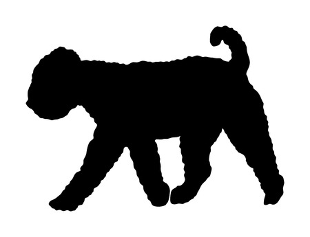 Portrait of Lagotto Romagnolo truffle dog vector silhouette illustration isolated. Italian dog breed. Çizim