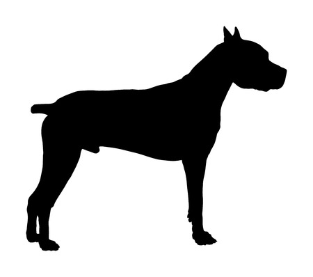 Dog portrait of American Staffordshire pit bull terrier vector silhouette illustration isolated. Beware of purebred dog. Dog show champion. Best friend. Alert, guard attention.