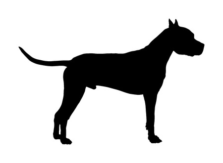 Dog portrait of American Staffordshire pit bull terrier vector silhouette illustration isolated.