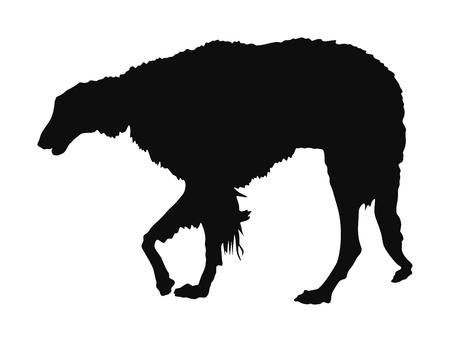 Portrait of White Russian Wolfhound dog vector illustration isolated. Borzoi silhouette Russian Hunting. Sighthound, Russkaya Psovaya Borzaya. Noble Psovoi. Illustration