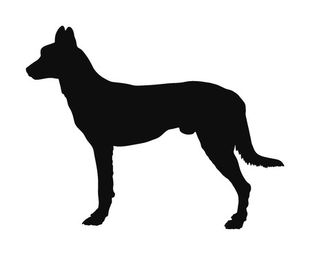 Portrait of Dutch shepherd silhouette illustration isolated.