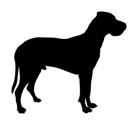 Portrait of Great Dane vector silhouette illustration isolated. Boston Dane. Harlequin dog. German dog.