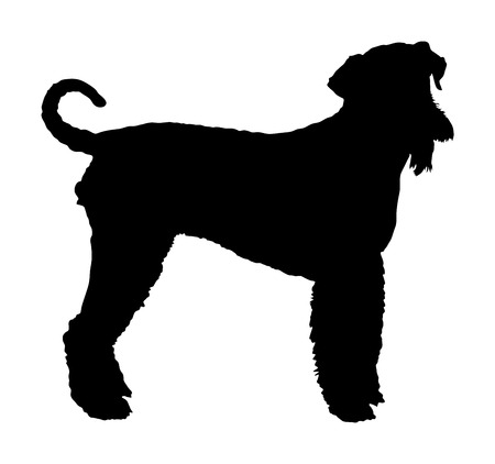 Portrait of Airedale Terrier vector silhouette illustration isolated. Big terrier dog shape. Ilustrace