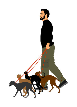 Walking the pack, array of dogs. Dog walking service vector illustration isolated on white background. Group of pets in friendly outdoor area. Park pet activity. Illustration