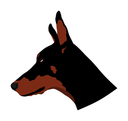 Portrait of Doberman Pinscher vector illustration isolated. German military guardian dog. Had of Dog for detecting smuggling drugs. Beware of dog.