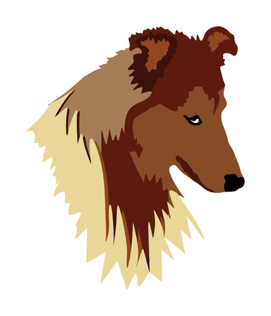 Portrait of Rough Collie had vector illustration isolated. Had of Scottish Shepherd dog. Beware of dog. Vettoriali