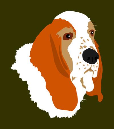 Portrait of Basset hound dog