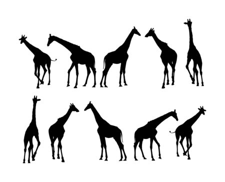 Giraffe vector silhouette illustration isolated on white background. African animal. Tallest animal. Safari trip attraction. Big five. Group of many giraffe in different poses. Иллюстрация