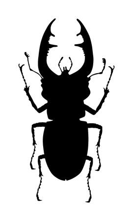 Ilustración de silueta de vector de escarabajo macho aislado sobre fondo blanco. (Lucanus cervus). Error de escarabajo ciervo. Ciervo escarabajo. Ilustración de vector