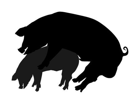 Illustrazione della siluetta di vettore del maiale. Maiali che si accoppiano in fattoria. Copulazione di accoppiamento sessuale di due maiali.