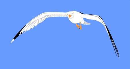 Seagull fly on blue sky background vector illustration, sea or ocean bird with spread wings. Bird fly silhouette. Symbol of liberty and freedom. Illustration