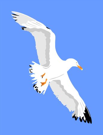 Seagull fly on blue sky background vector illustration, sea or ocean bird with spread wings. Bird fly silhouette. Symbol of liberty and freedom. Ilustração