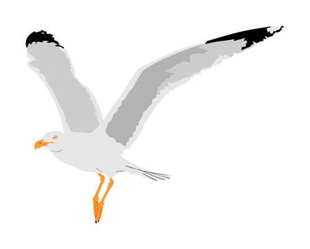 Mouette voler sur illustration vectorielle ciel isolé sur fond blanc. Oiseau de mer ou d'océan aux ailes déployées. Silhouette de mouche d'oiseau. Symbole de liberté et de liberté.