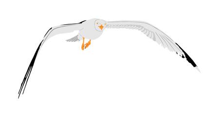 Vuelo de la gaviota en la ilustración del vector del cielo aislada en el fondo blanco. Ave de mar u océano con alas extendidas. Silueta de mosca de pájaro. Símbolo de libertad y libertad. Ilustración de vector