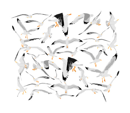 Seagulls fly on sky vector illustration collection isolated on white background, sea or ocean bird with spread wings. Bird fly silhouette. Symbol of liberty and freedom. Ilustração