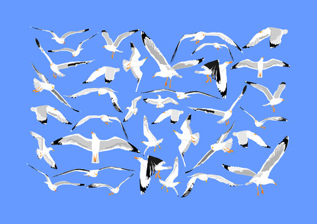 Seagulls fly on blue sky background vector illustration collection, sea or ocean bird with spread wings. Bird fly silhouette. Symbol of liberty and freedom.