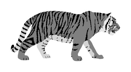 Tiger vector illustration isolated on white background. Big wild cat. Siberian tiger (Amur tiger - Panthera tigris altaica) or Bengal tiger. Tatoo sign.