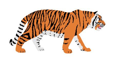 Ilustración de vector de tigre aislado sobre fondo blanco. Gran gato salvaje. Tigre siberiano (tigre de Amur - Panthera tigris altaica) o tigre de Bengala.