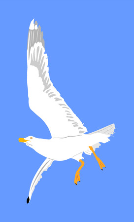 Seagull fly on blue sky background vector illustration, sea or ocean bird with spread wings. Bird fly silhouette. Ilustração