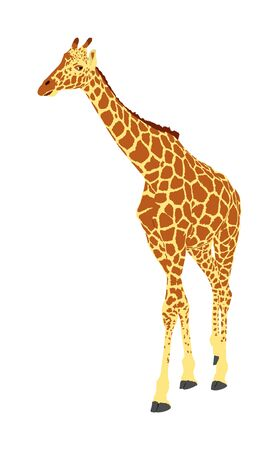 Giraffe vector illustration isolated on white background. African animal. Tallest animal. Safari trip attraction. Big five. Giraffe in gallop pose. Portrait of giraffe.