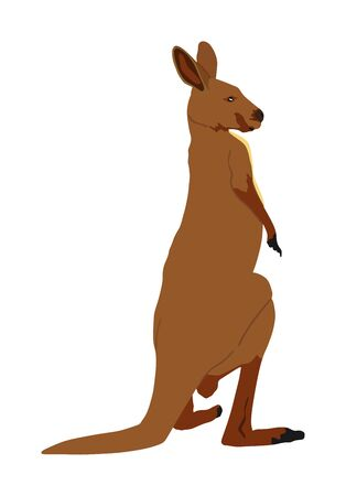 Kangaroo vector illustration isolated on white background. Australian animal portrait. Tourist symbol souvenir. Fauna best jumper. Zoo attraction. 矢量图像