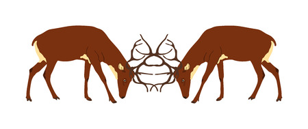 Deer battle vector illustration isolated on white background. Reindeer, proud Noble Deer male in forest, zoo. Powerful buck with huge neck and antlers. Red deer fighting for female. Struggle in forest