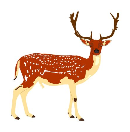 Deer vector illustration isolated on white background. Silka deer, proud Noble Deer male in forest or zoo. Powerful buck with huge neck and antlers standing. Red deer.