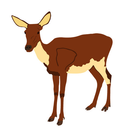 Deer female vector illustration isolated on white background. Reindeer fawn. Proud Noble Deer in forest or zoo. Roe deer standing on alert looking. Doe isolated. Fawn vector isolated.