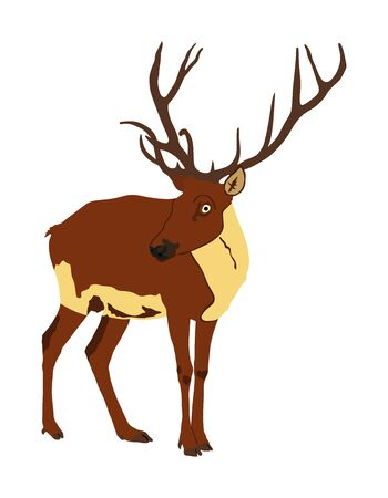 Deer vector illustration isolated on white background. Reindeer, proud Noble Deer male in forest or zoo. Powerful buck with huge neck and antlers standing. Red deer Illustration