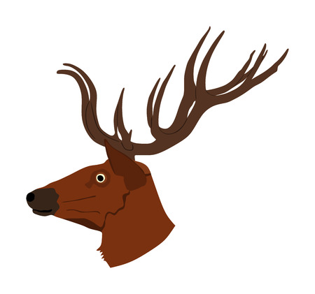 Deer head with antlers vector illustration isolated on white background. Reindeer, proud Noble Deer male trophy. Powerful buck, red deer. Hunter hunting  wild animal, symbol of male power. Ilustração