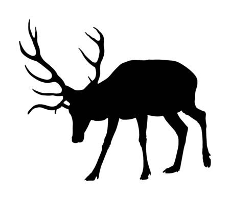 Deer vector silhouette isolated on white background. Reindeer, proud Noble Deer male in forest or zoo. Powerful buck with huge neck and antlers standing. Red deer grazing grass.